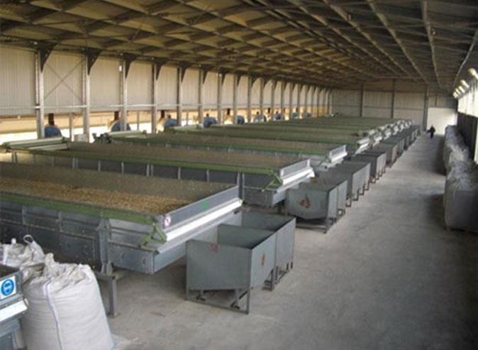Как сушить зерно в домашних условиях: различные способы сушки
